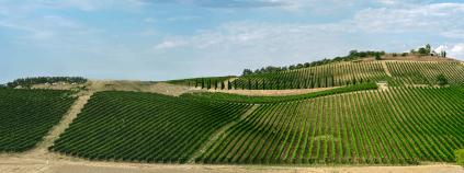 Weinberge bei Montepulciano