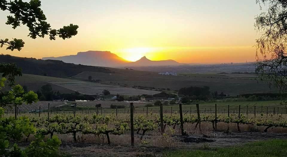 Sonnenuntergang über den Weinbergen von Kaapzicht