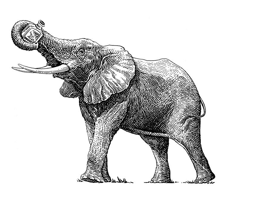 Elephant Gin Ltd.