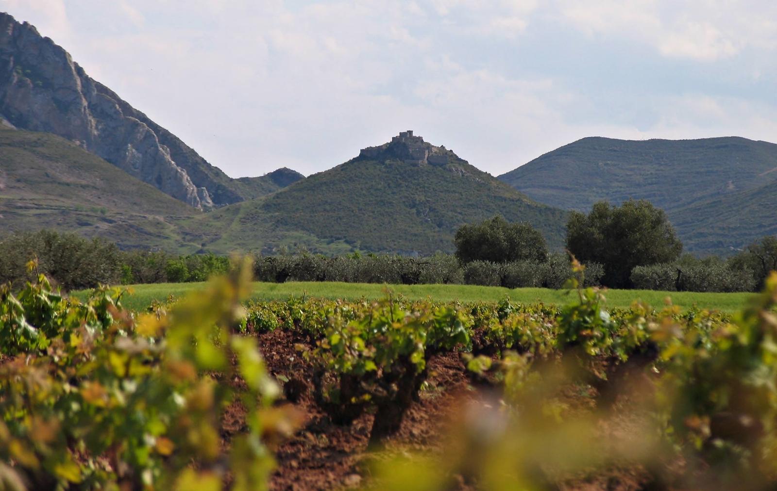 Das Valle de Jubera biete perfekte Anbaubedinungen