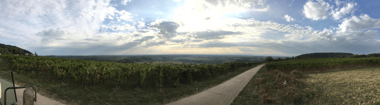 The vineyards of Lukas Kesselring in the Palatinate region of Germany