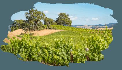 Natürlich gedeiht es sich leichter - Fetzer Vineyards