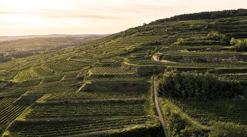 Weingut Bründlmayer - Die Lage Zöbinger Heiligenstein
