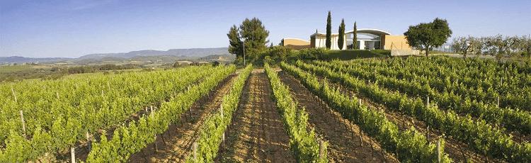 Das Weingut Jean Leon in Penedes