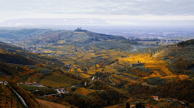 Conte di Campiano Brindisi Vineyards